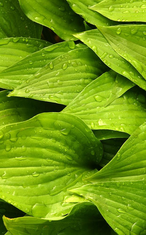 GreenFlowers2