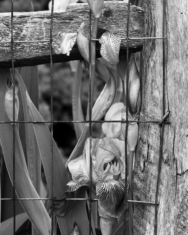 TrappedFlowers